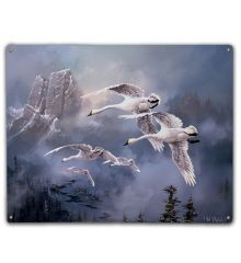 Mountain Swans